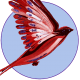 Firmenlogo vom Unternehmen Bird-Shop.de aus Winsen